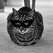 Super Kitty  by brigette