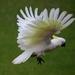 """""""Bird Life""""... by tellefella"""