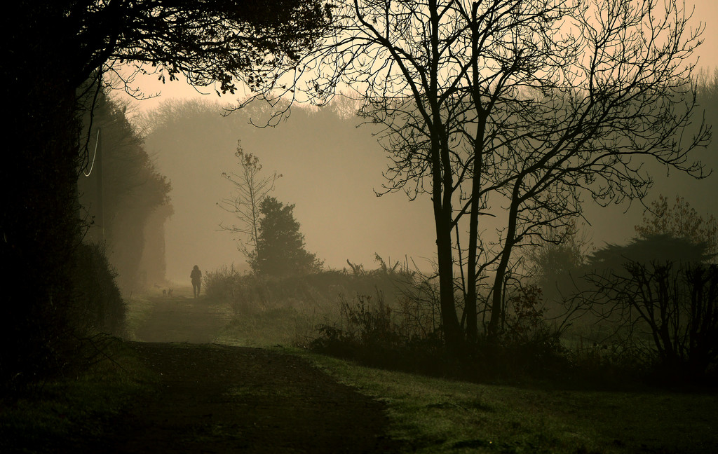 Morning Mist by newbank