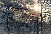 20th Nov 2014 - The Great Big Lying Winter Sun