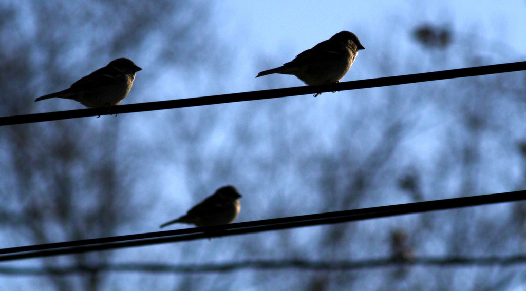 Little birds by mittens
