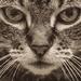 Wild Katie Cat
