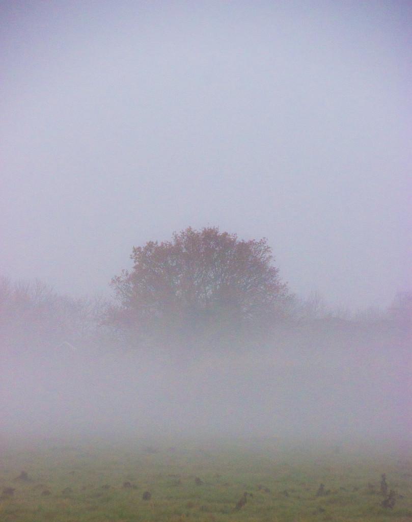 Mist opportunity by shepherdman