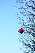 21st Nov 2014 - The ladybug.