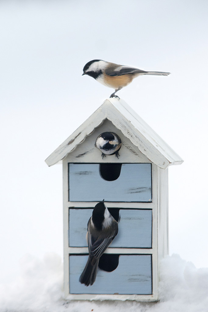 Chickadee House! by fayefaye