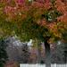 Tree still holding leaves