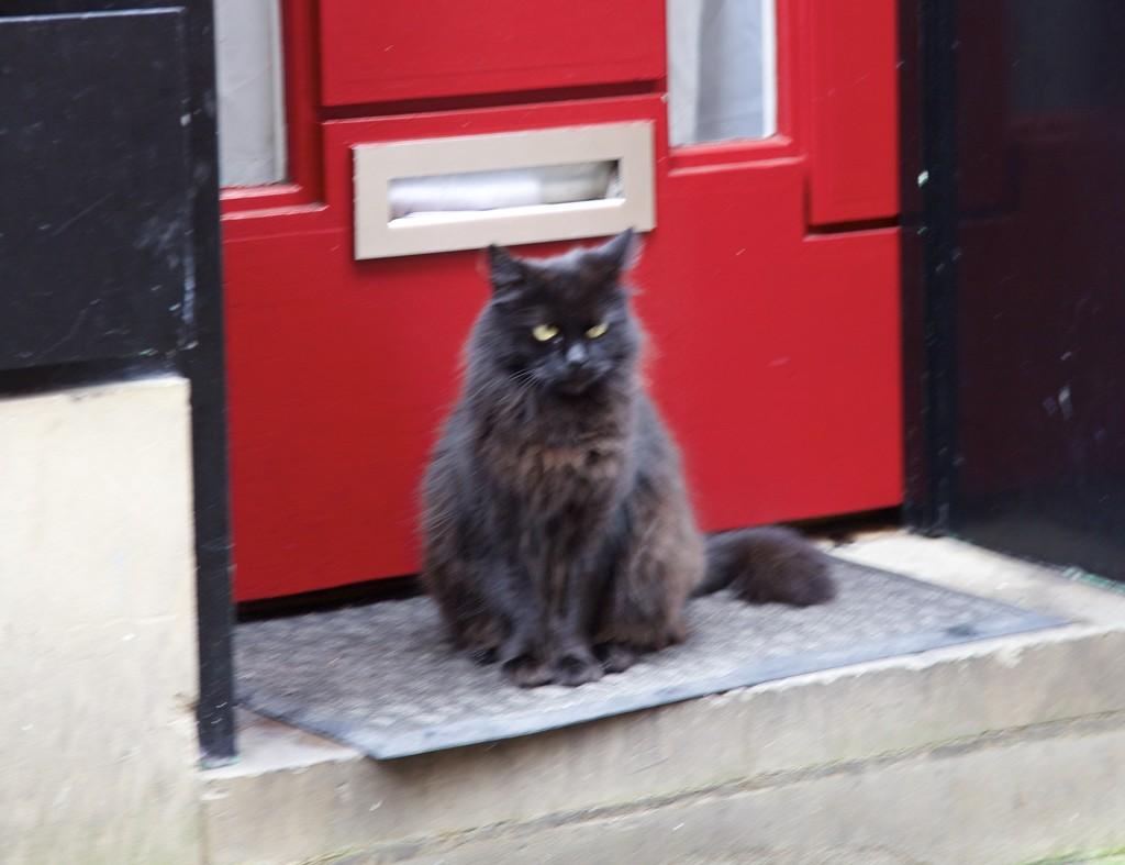 Help-someone shrank the cat flap!!!! by padlock