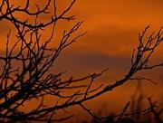 22nd Nov 2014 - Sundowner