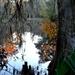 Autumn scene at the lake, Magnolia Gardens, Charleston, SC by congaree