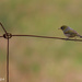 Bird on a wire, what skill by flyrobin