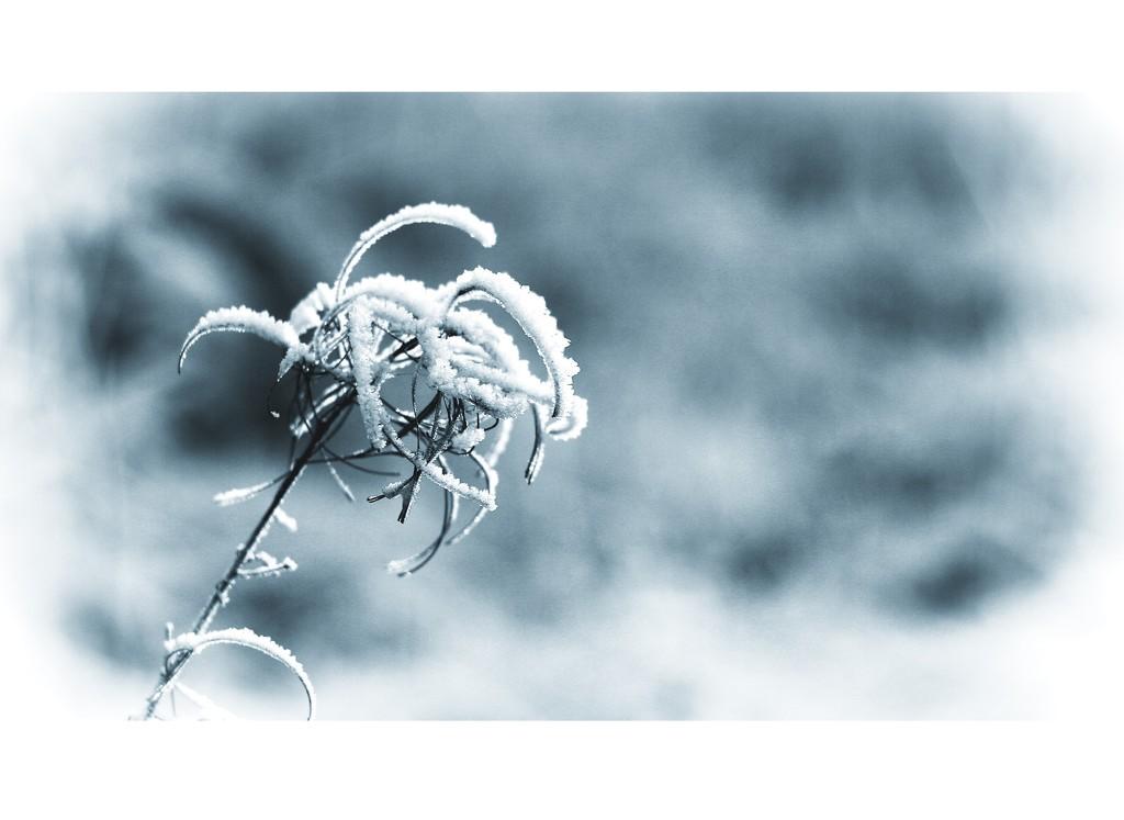 Winterly Symphony by susale