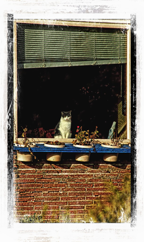 Cat in the window by teiko