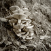 Monochrome Mushrooms: an itch scratched! by vignouse
