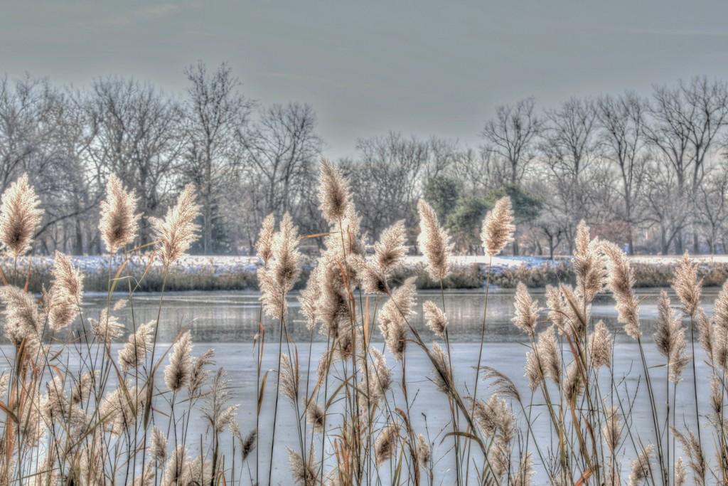 Looks A Lot Like Winter by lynnz