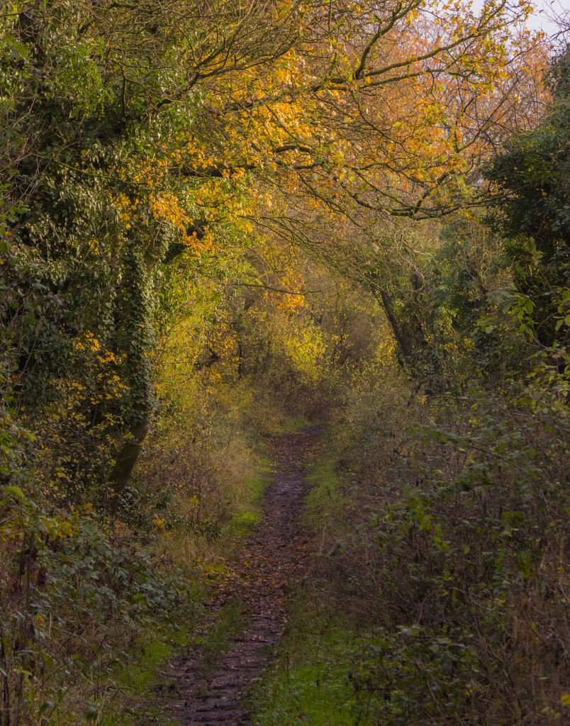 Leafy trail by shepherdman