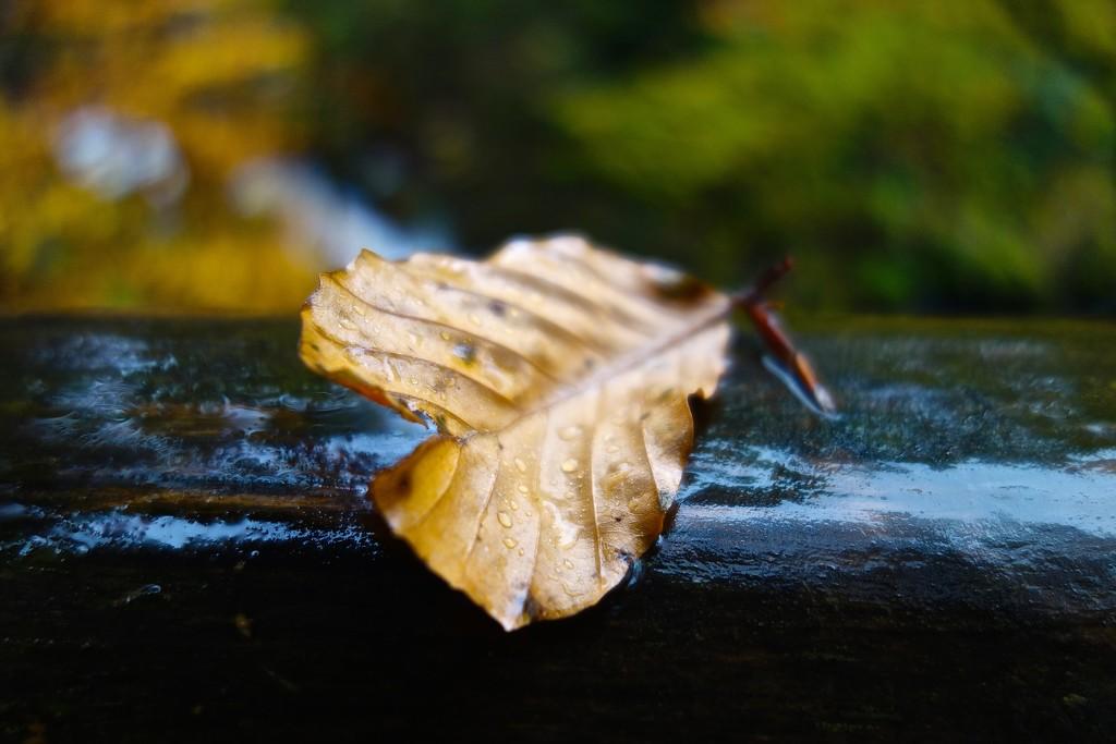 Humidity. by cocobella