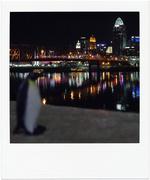 24th Nov 2014 - Emperor Penguin Visits Queen (City)