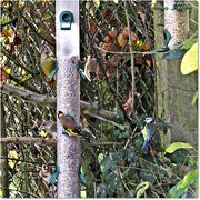 24th Nov 2014 - Feeding Birds