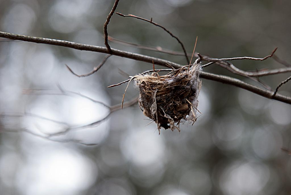 Nest for SALE! by fayefaye