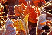 24th Nov 2014 - Rimmed in Frost