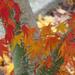 Last Vestiges of Fall by seattlite