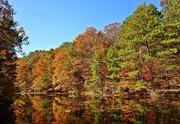 26th Nov 2014 - On golden pond