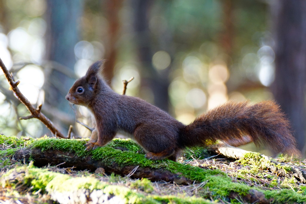 """"""" NOW, MAKE SURE YOU GET ALL MY LOVELY TAIL IN PLEASE""""   by markp"""