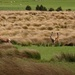 The Red Tussock