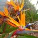 Bird of Paradise by leestevo