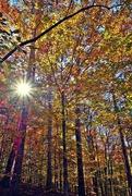 28th Nov 2014 - Here comes the sun