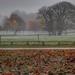 Misty Autumn Day.. by shepherdmanswife