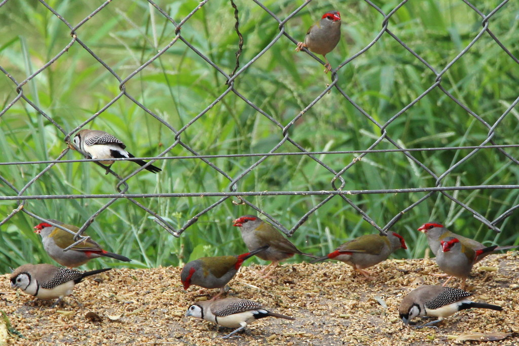 Finches by terryliv