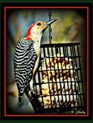 27th Nov 2014 - Big Bird, Small Feeder