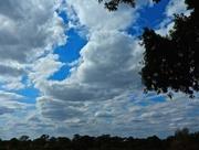 28th Nov 2014 - Blue skies smilin' at me
