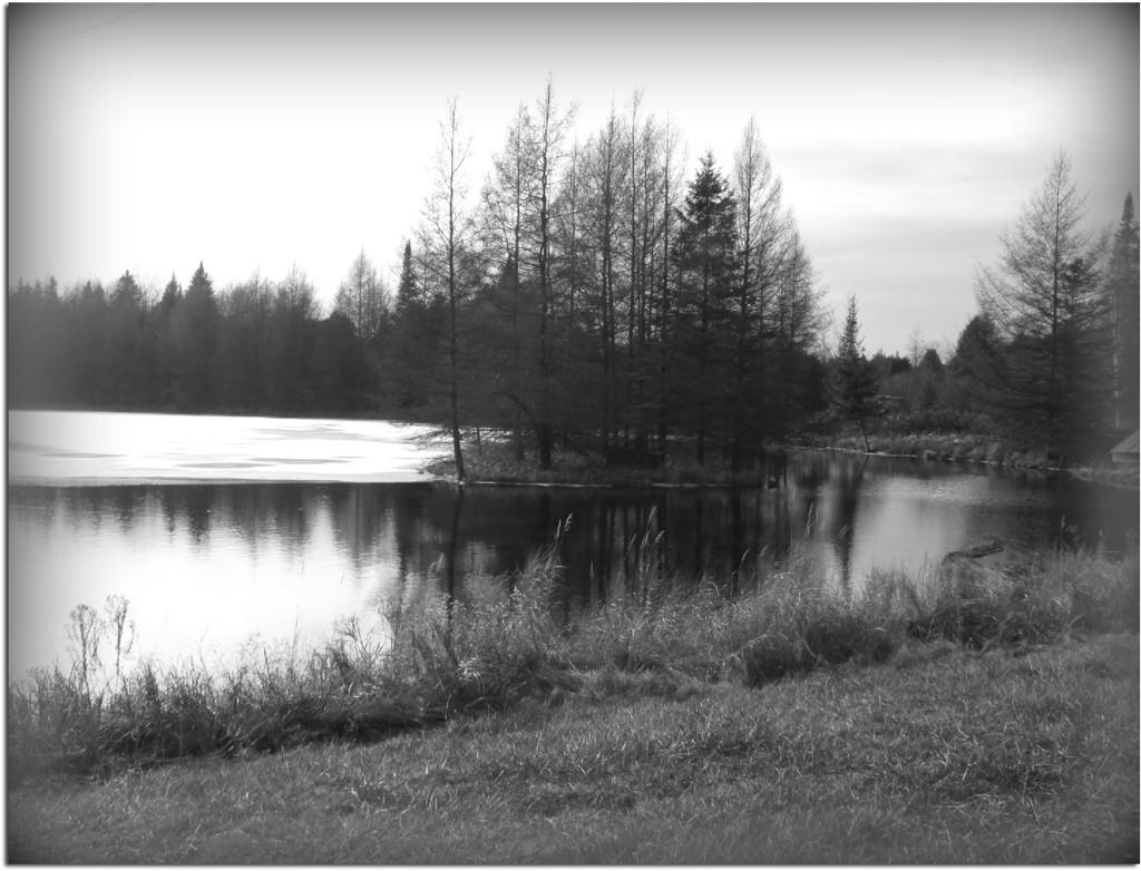Pond by bruni