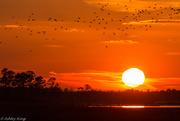 30th Nov 2014 - Blackwater sunset