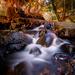 Larson Creek