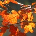 Fall Fire by grammyn