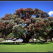 New Zealand Christmas Tree.. by julzmaioro