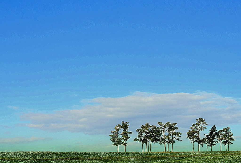 Trees on a hilltop! by homeschoolmom