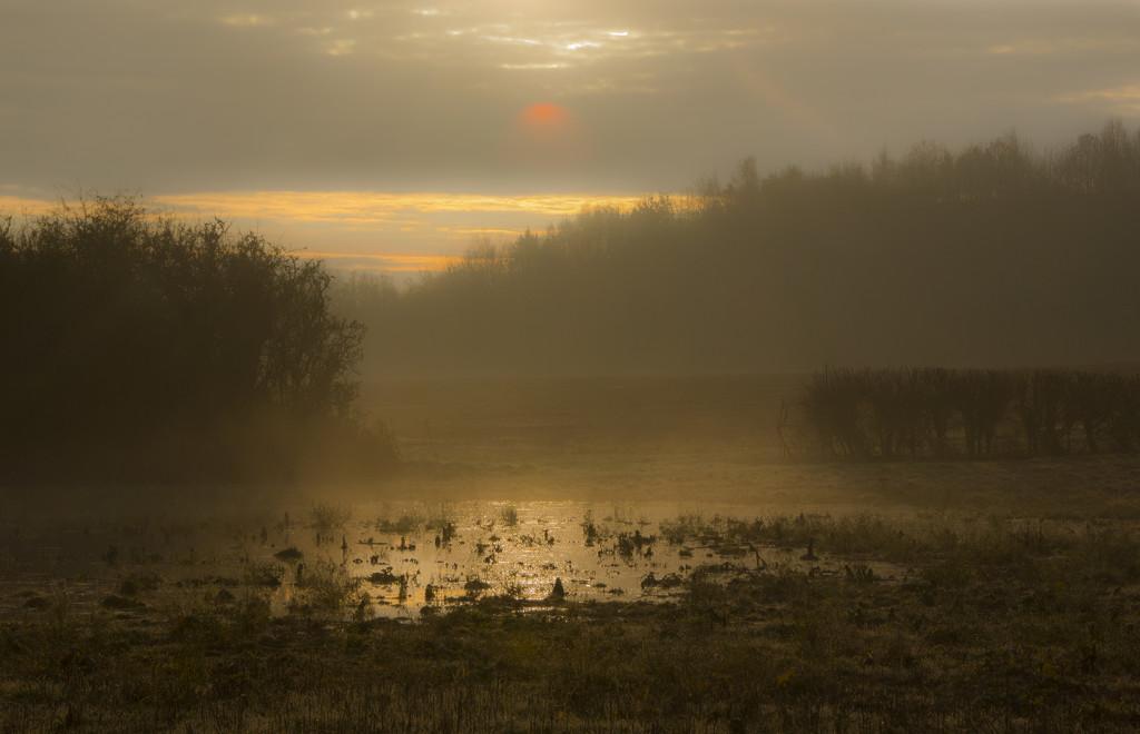 Golden dawn by shepherdman