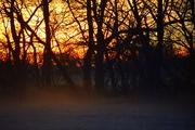 30th Nov 2014 - Sunrise Touches Fog