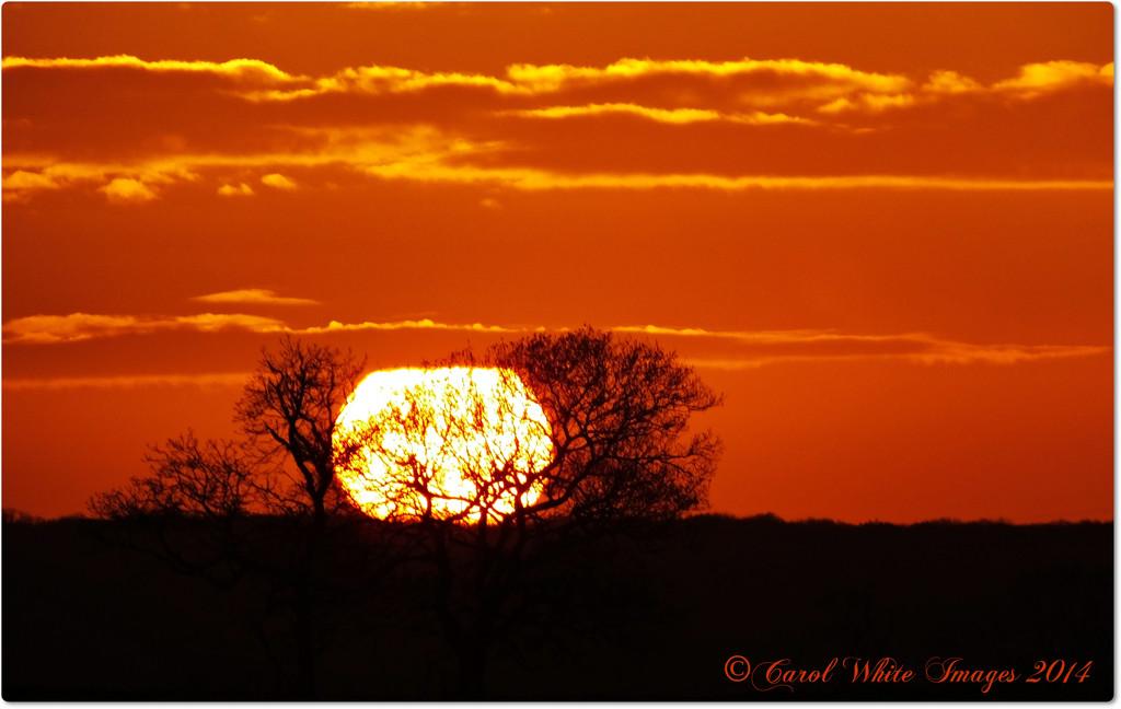 Setting Sun by carolmw