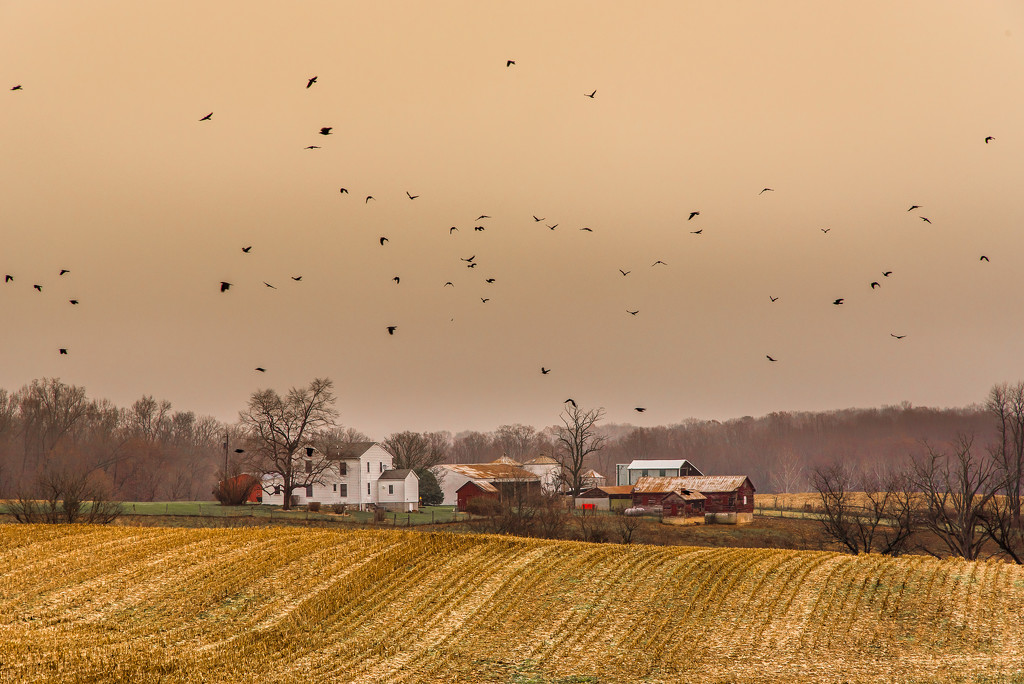 It's Raining Crows by lesip