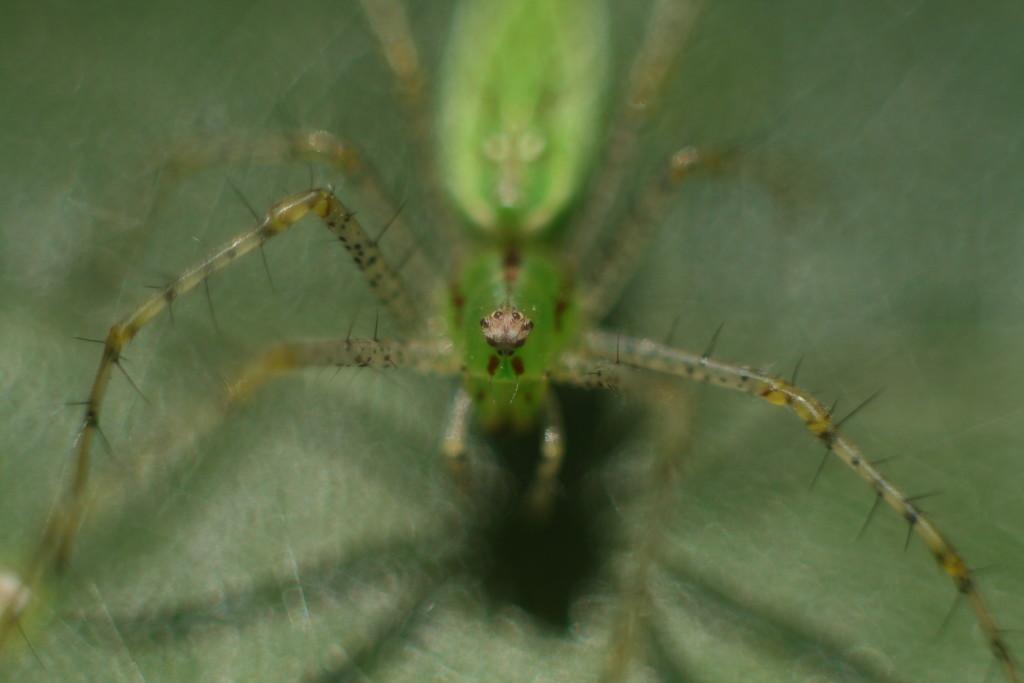 Spider by kerristephens