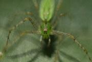 3rd Dec 2014 - Spider