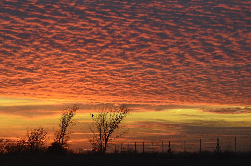 Hawk's Sky Cover by kareenking