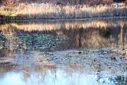 15th Nov 2014 - Reflections
