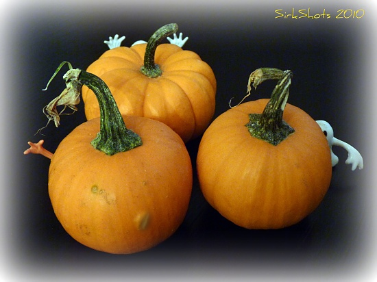 Beware of the Miniature Pumpkin Patch by peggysirk