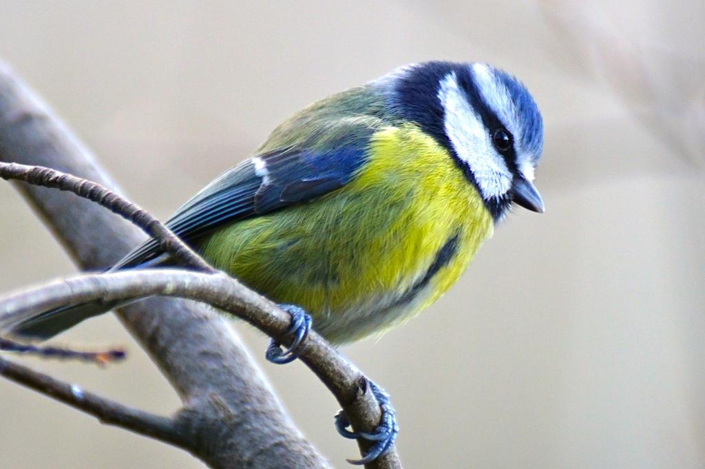 PRETTY BIRD by markp